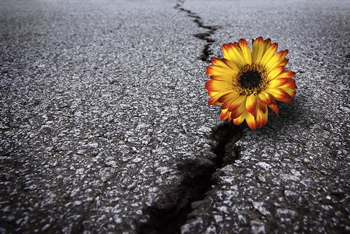Flower-In-Asphalt